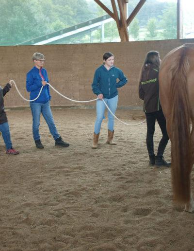 Bodenarbeit pferdegestützte Coaches, Bodenarbeit pferdegestützte Coachings | Bildungswerk für pferdegestützte Coachings & Trainings